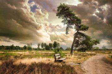 Stilte voor de storm van Arjen Roos