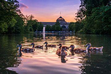 Ganzen in het park van Jens Sessler