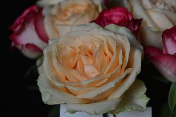 Rose Roos von Coosje Wennekes