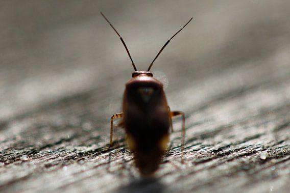 Bug van Erwin Verweij