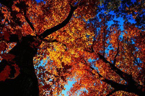 Herfst kleurt de bomen