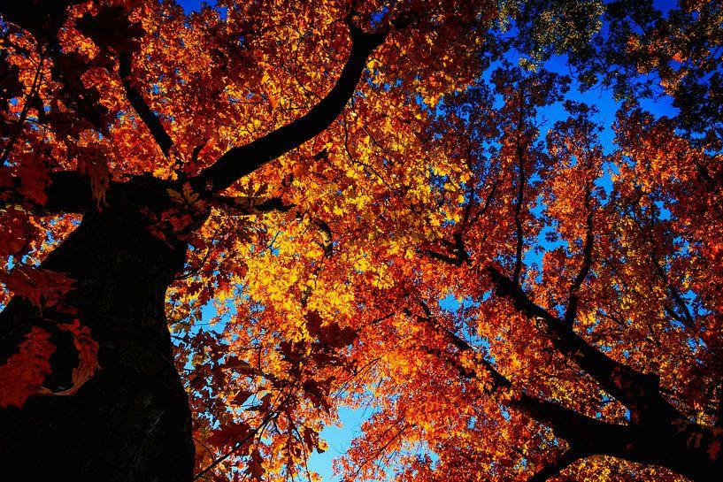 Herfst kleurt de bomen van Koop je Canvas