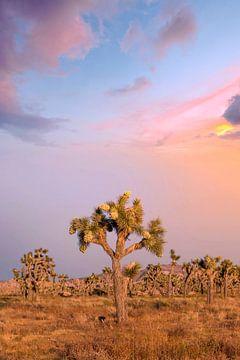 Betoverende zonsondergang in het Joshua Tree National Park van Melanie Viola