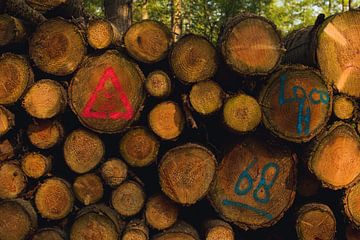 Gekapte bomen met verf van