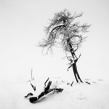 einsamer Überlebenskünstler von Guy Lambrechts
