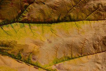 De woestijn van Ivette Braem