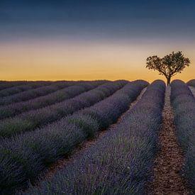 Lavendel veld in de Provence van Toon van den Einde