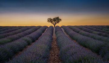 Lavendelfeld in der Provence von Toon van den Einde