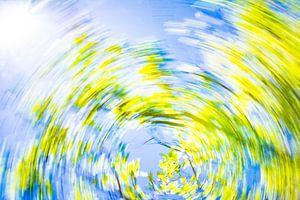 Daytrails - boom - zon - zomer - groen - fris van Sven Van Santvliet