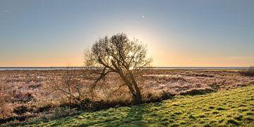Boom in Gaasterland aan de rand van het IJsselmeer van