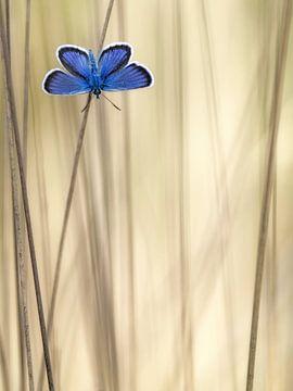 Vlinder sur Daan de Vos