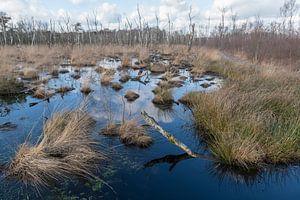 Natuurreservaat het Wooldse veen in Winterswijk van