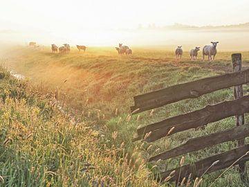 Landleven van Dirk van Egmond