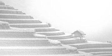 Hochkarätige minimalistische Landschaft Reisfelder China von Art By Dominic