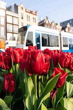 Amsterdam - tulpen en tram sur Thea.Photo