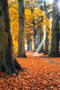 Zonnestralen en laantje in herfstkleuren