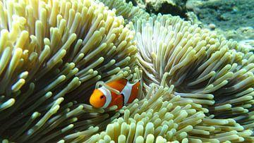 clownsvis van Paula de Wit