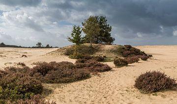 Veluuws landschap van Peter Leenen