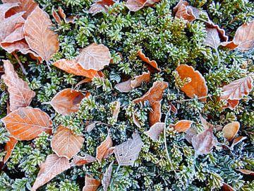 Herfstbladeren met rijp sur Joke te Grotenhuis