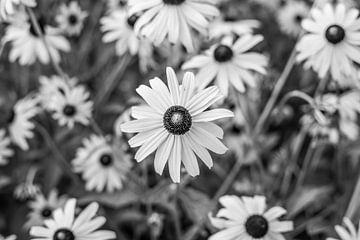 Bloemen in zwart wit van Manon van Goethem
