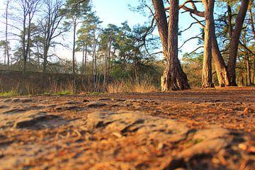 Close up in het bos van Capture the Moment 010