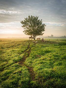 Typisch Hollands polderlandschap met boom, koeien en schapen van Jasper Suijten