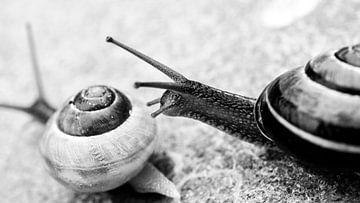 slakkenrace von Robby Stifter