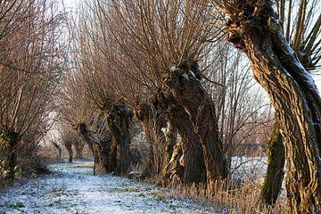Pollard Weiden im Winter von Raoul Suermondt