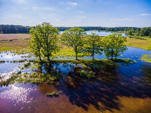 Galderse Heide, Mastbos Breda, The Netherlands - Aerial Shot - Summer van