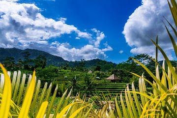 Reisterassen von Ubud auf Bali von Fotos by Jan Wehnert