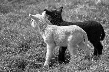 Noir et blanc en noir et blanc sur Foto Amsterdam / Peter Bartelings