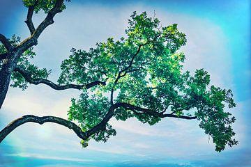 Arbre Bonsai en extra large ! Photo de nature calme au printemps sur Jakob Baranowski - Off World Jack