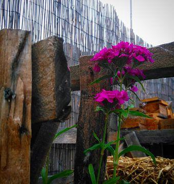 Paarse bloem tussen het tuinhout van Deborah Blanc