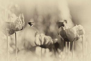 Macro abeille et pavot dans un style nostalgique sur Marianne van der Zee