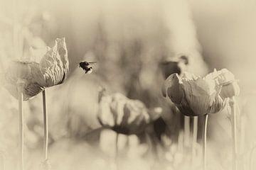 Makro-Biene und Mohn im nostalgischen Stil von Marianne van der Zee
