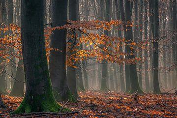 Letzte Farben für den Winter von Toon van den Einde