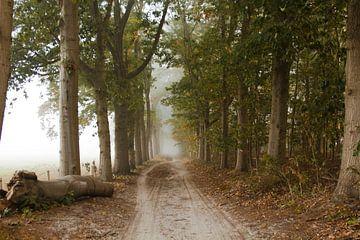 Nebel im Wald von Sabina Meerman