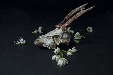 Stillieven schedel reebok III van Exitthegrey Fotografie
