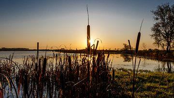 Sonne hinter der Lisdodde von Jaap Terpstra