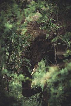Elefant im Kruger National Park. von Niels Jaeqx