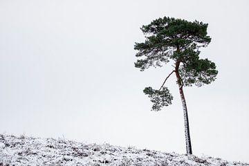 Eenzaam in de sneeuw (2)