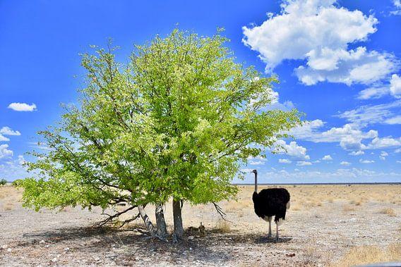 Struisvogel en jong van Iduna vanwoerkom