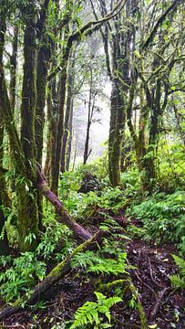 Bunter Dschungel in Thailand von Lynn's foto's