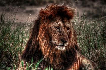The King von BL Photography