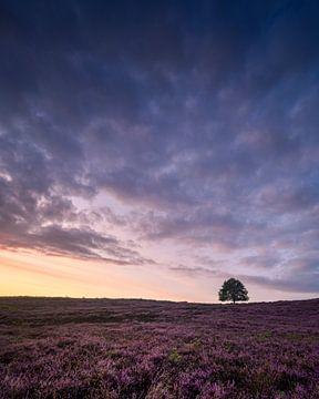 Schöner Himmel und violettes Heidekraut von Sander Grefte