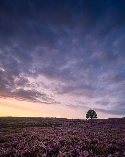 Prachtige lucht en paarse heide van
