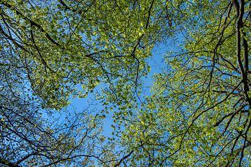 Bos, bomen en lucht
