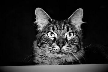 Cyperse kat kijkt over randje van Maud De Vries