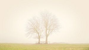Bäume im Lentevreugd