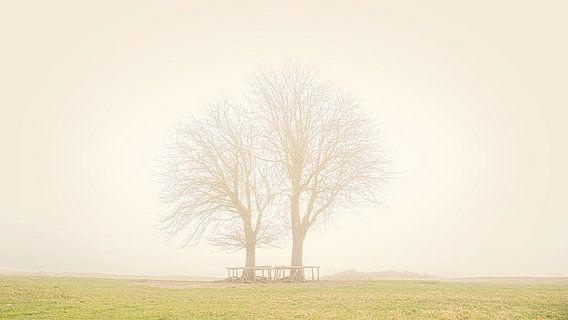 Bomen in Lentevreugd